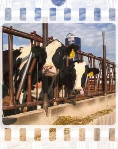 Who protects farm animals?