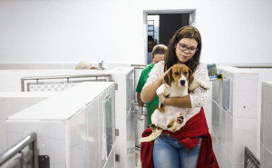 brazil-beagle-lab-rescue-4