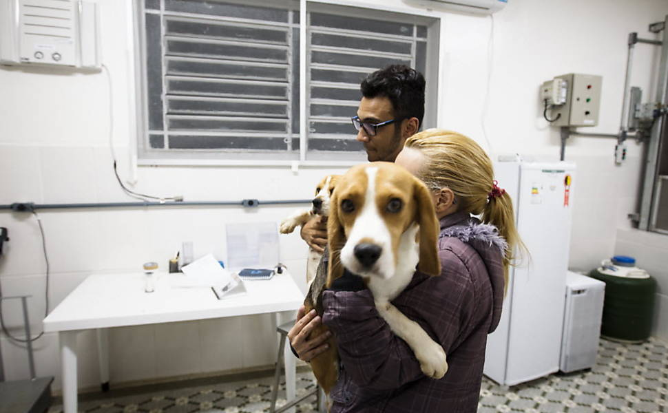 brazil-beagle-lab-rescue-7