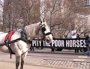 carriage horse protest homeland security