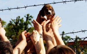 Italian activists rescue dogs from Green Hill breeders