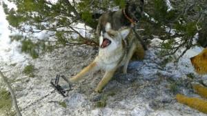 jamie-olson-usda-cruelty