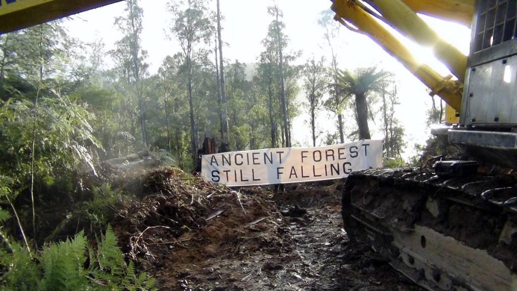 tasmania-forests-still-falling