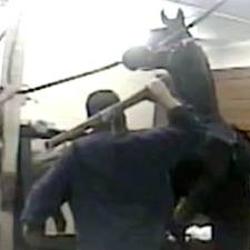 tennessee-horse-investigation