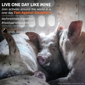 world-day-farmed-animals-fast